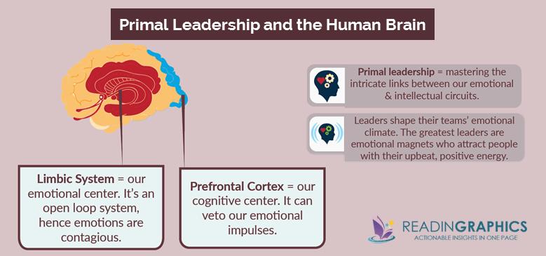 Primal Leadership summary_primal leadership and brain