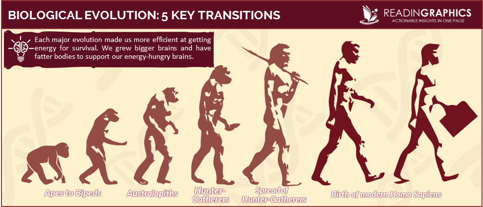 The Story of the Human Body summary_Biological Evolution